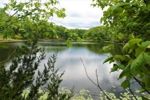 Lake sits on 74 acres of heavily wooded and manicured green space