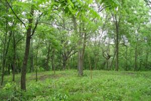 Property for sale at S38W33821 County Road D, Dousman,  WI 53118