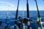 Amazing fishing in Puerto Peñasco! #puertopenascohomes #rockypointhomes #playa #mar #whalehill #luxury #homes #waterfront #views #ocean #family #fun #vacations