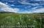 Irrigaed pasture potential