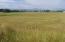 Meadow V3