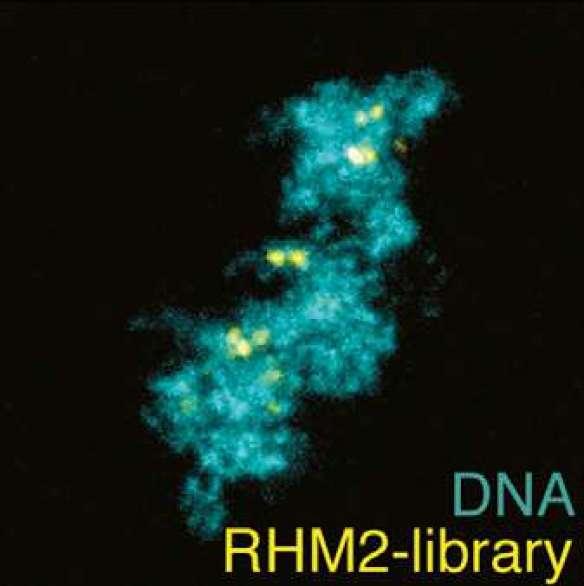Simple technology makes CRISPR gene editing cheaper