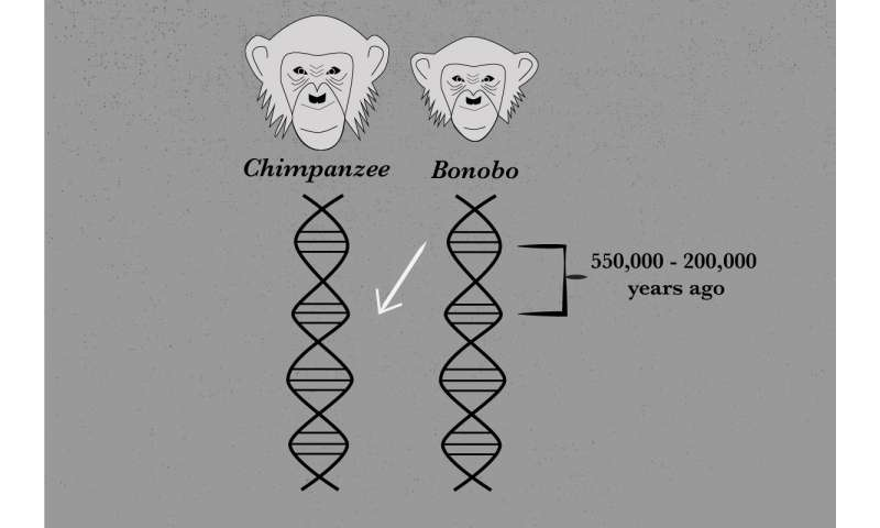 Genome sequencing reveals ancient interbreeding between