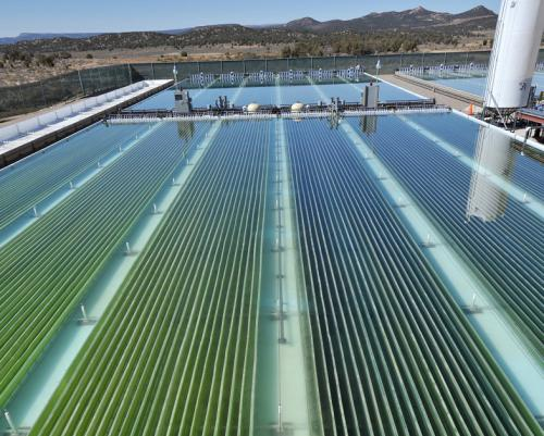 According to Global Assessment, Algae Good Candidate for Biofuel