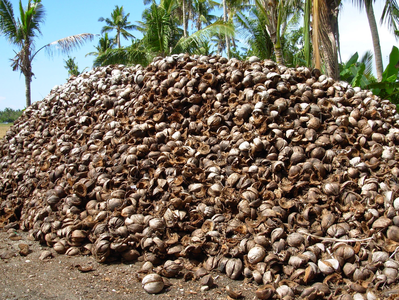 Company Converts Coconut Husk Fibers Into Materials For