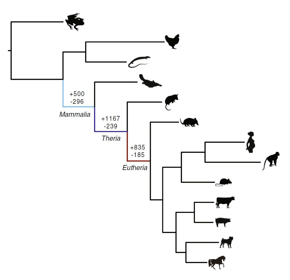Ancient 'genomic parasites' spurred evolution of pregnancy