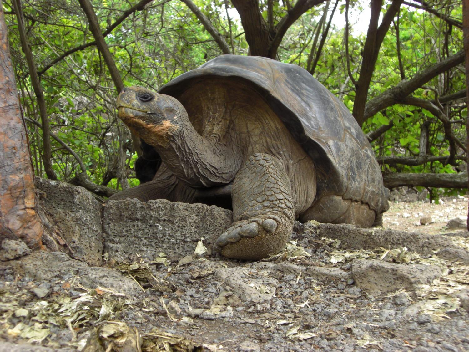 Study Pinpoints When The Galapagos Islands Developed Their