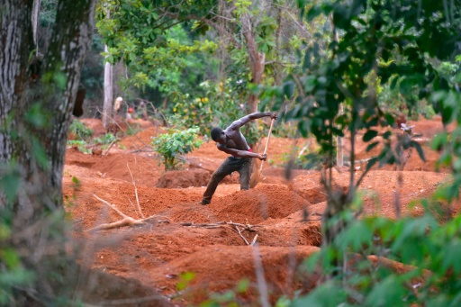 An informal miner on a cleared plot (Source: AFP)