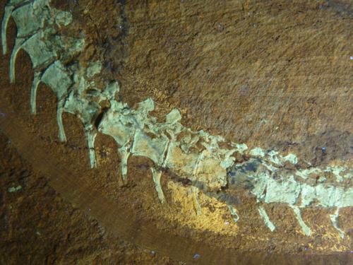 Dinosauro appena scoperto implica una maggiore prevalenza di piume