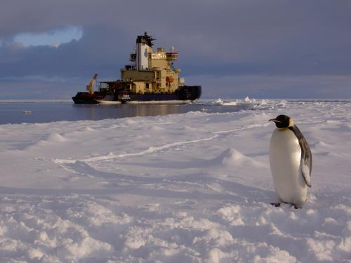 Scientists uncover vast differences in Earth's polar ocean microbial communities