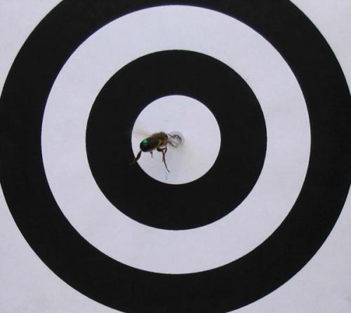 https://i0.wp.com/cdn.physorg.com/newman/gfx/news/2013/honeybeebrains1.jpg