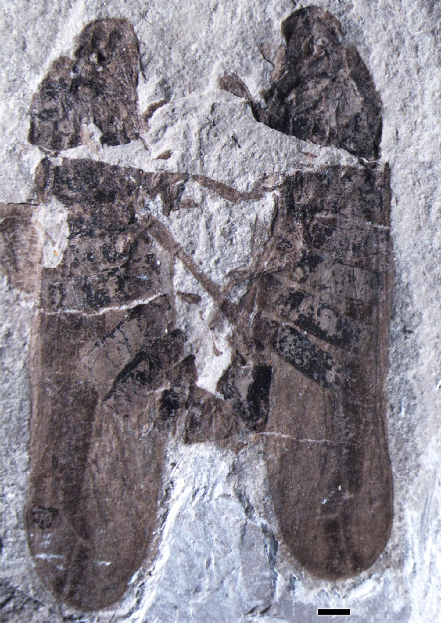 This image shows a holotype male, on the right, and allotype female, on the left. Credit: PLoS ONE 8(11): e78188. doi:10.1371/journal.pone.0078188