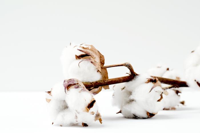 algodón, ICAC