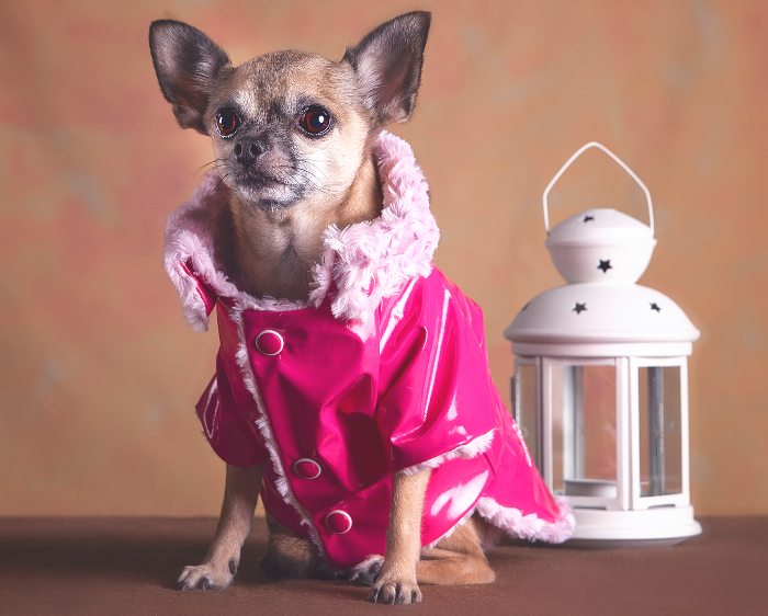 abrigo perro, GentleDog, moda para perro, moda perro, moda perruna, ropa de perro, tienda online de moda para perro