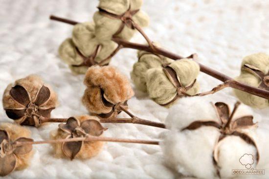 Organic Cotton Colours, proyecto OCCGuarantee, OCCGuarantee, algodón orgánico, tinte natural, tintura sostenible