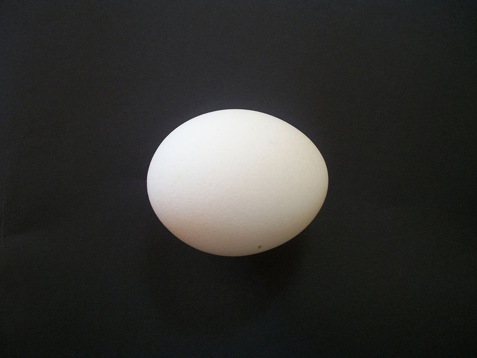 Egg Isolated Chicken  Free photo on Pixabay