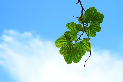 Leaves, Twig, Branch, Sky, Blue, Cloud