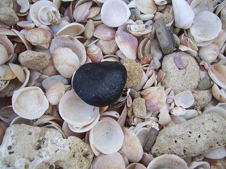 Seashell, Shellfish, Shells, Texture