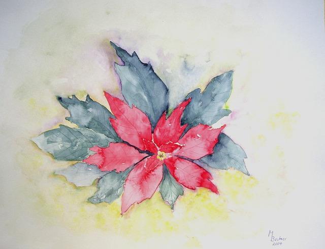 Poinsettia Flower Plant  Free image on Pixabay