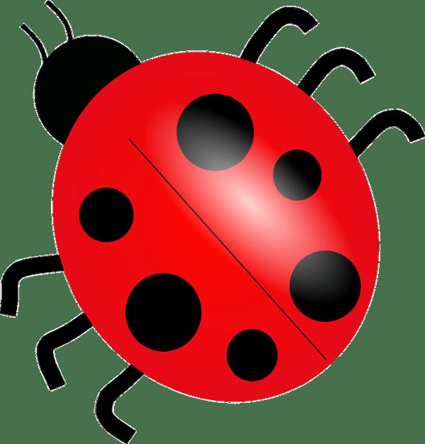 ladybug ladybird bug free vector
