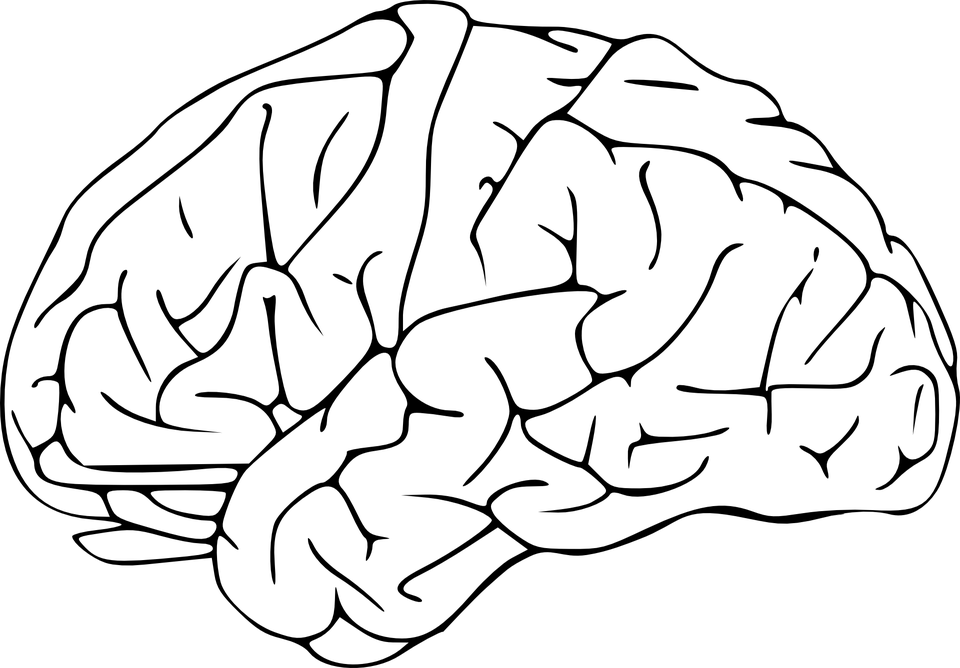 human brain diagram cerebrum 2003 gmc radio wiring free vector graphic: brain, human, anatomy, outline - image on pixabay 25606