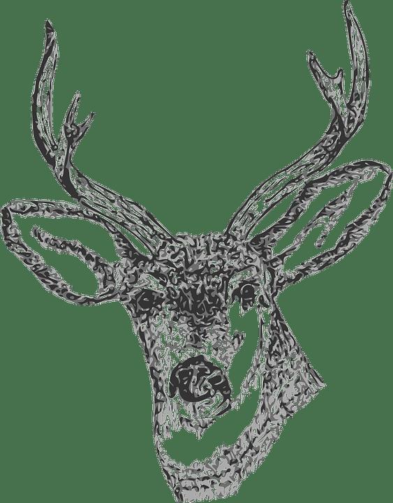 Image Vectorielle Gratuite Buck Tte Cerf Cerfs