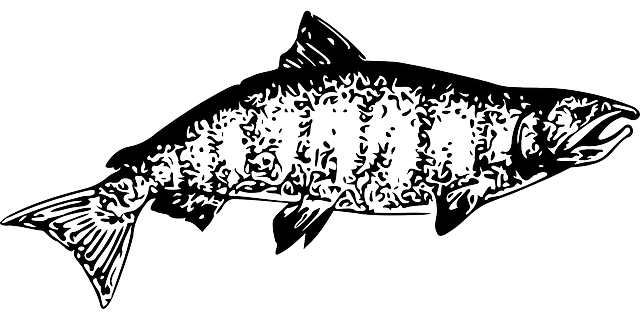 Free vector graphic: Salmon, Fish, Food, Water, Seafood