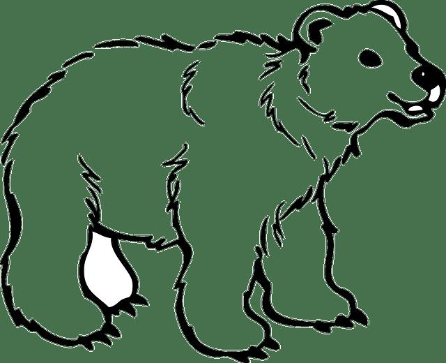 Bear Cub Animal · Free vector graphic on Pixabay
