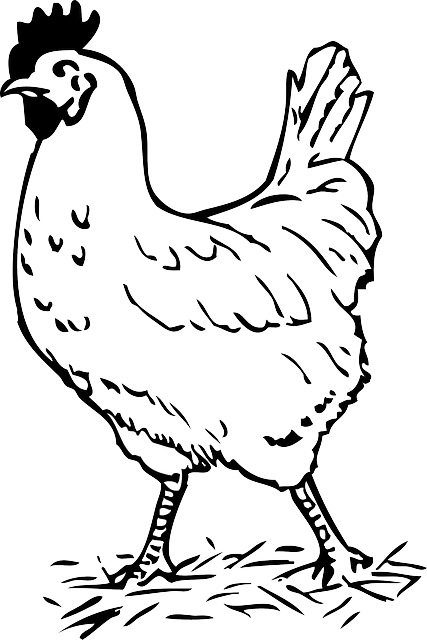 Rooster Bird Chicken · Free vector graphic on Pixabay