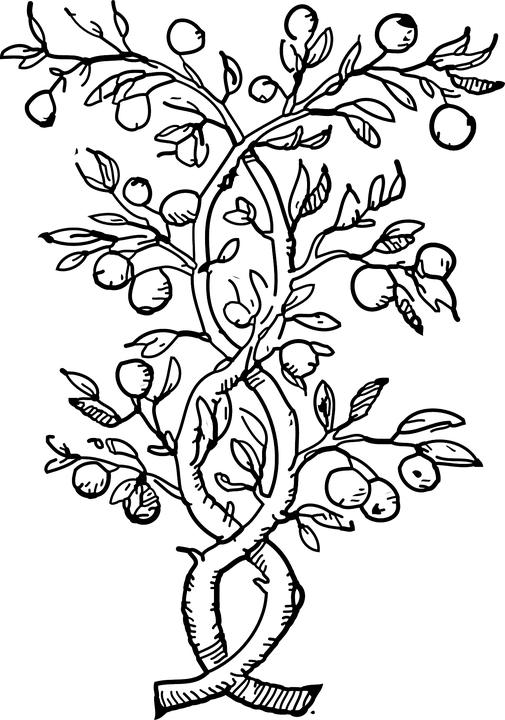 Plants Climbers Vines Black And · Free vector graphic on