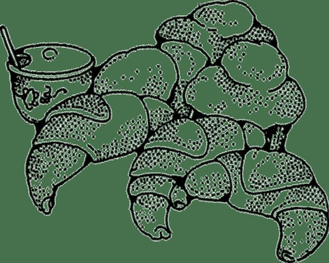 Free vector graphic: Croissant, Rolls, Bakery, Breakfast