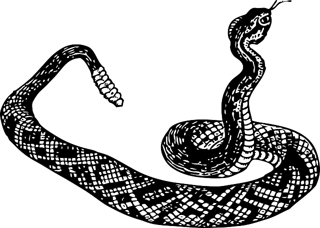 Free Vector Graphic: Rattlesnake, Snake, Poison, Curled