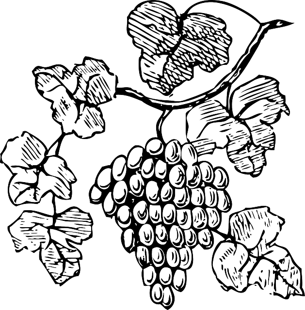 Grapes Grapevine Fruits · Free vector graphic on Pixabay