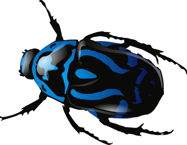beetle insect bug free vector