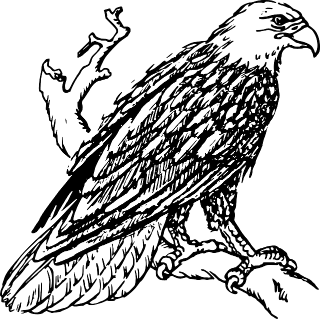 Eagle Head Graphic Vector