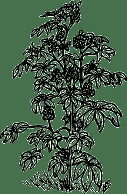 Free vector graphic: Castor, Oil, Plants, Herbal, Herbs