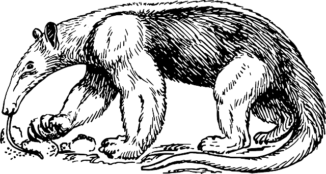 Anteater Ant Eater · Free vector graphic on Pixabay
