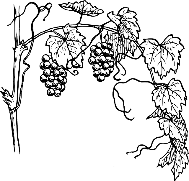 Grapes Vines Fruits · Free vector graphic on Pixabay