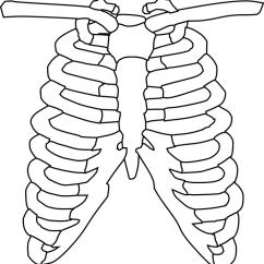 Diagram Of Skeletal Ribs Thermostat Quit Working Ribcage Bones Free Vector Graphic On Pixabay Lungs Biology Science