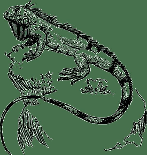 Lizard Reptile Iguana · Free vector graphic on Pixabay