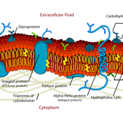 Microbiology Prokaryotic Cell Diagram Labeled 2004 Ford F150 Radio Wiring Biology · Free Vector Graphic On Pixabay