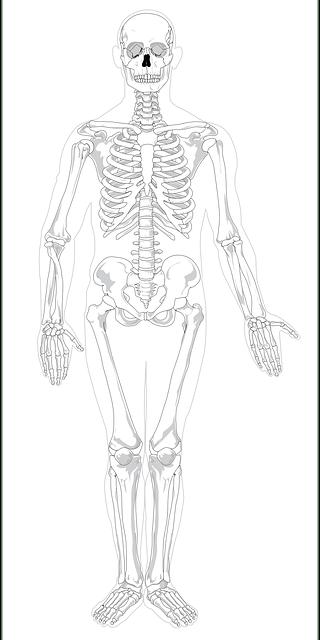 Skeleton Human Skeletal · Free vector graphic on Pixabay