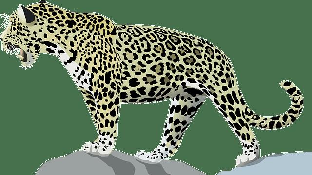 Ona Pintada Animal Gato  Grfico vetorial grtis no Pixabay
