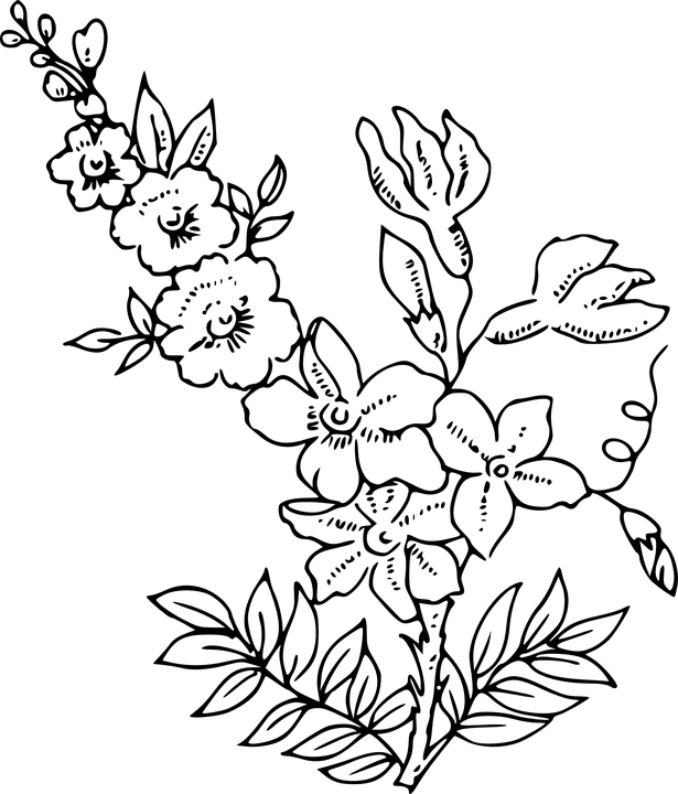 Flowers Plants White · Free vector graphic on Pixabay