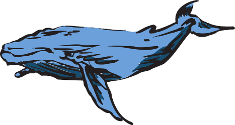 whale humpback game pixabay challenge vector sea suicide attempts graphic kaikoura last tragic