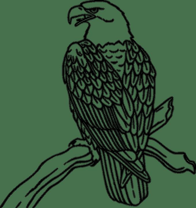 Kostenlose Vektorgrafik: Baum, Zweig, Adler, Vogel