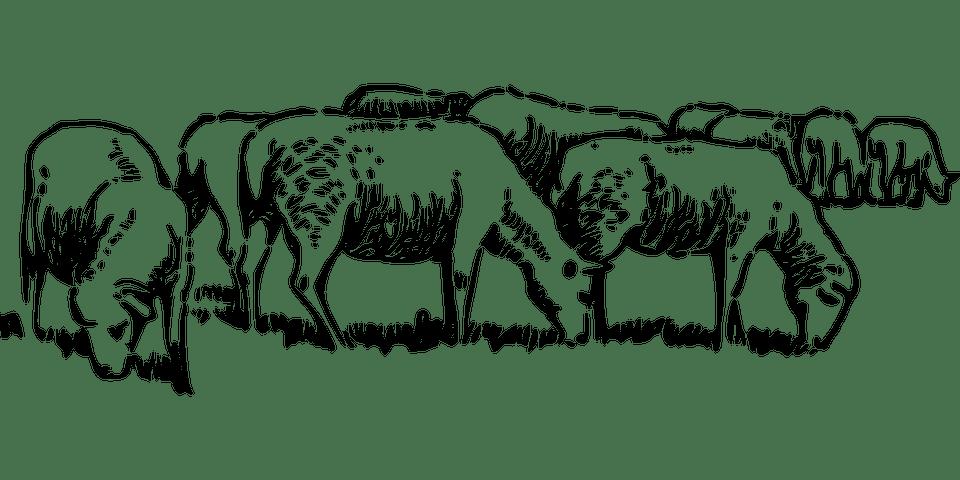 Free Vector Graphic Animals Barn Farm Sheep Grazing
