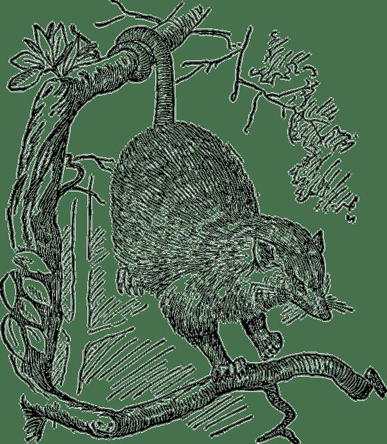 Free vector graphic: Opossum, Animal, Possum, Hanging