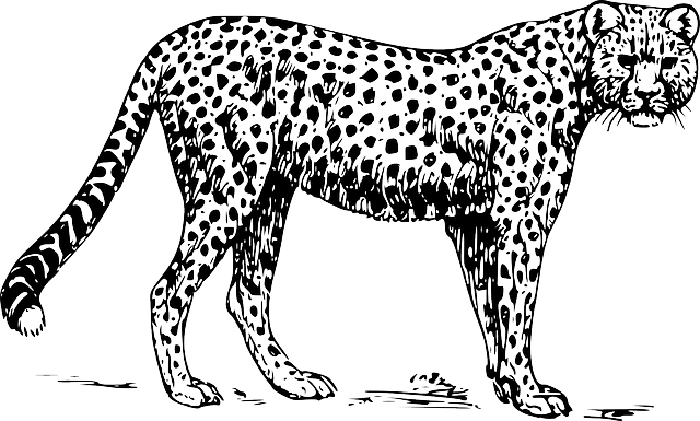 Cheetah Animal Mammal · Free vector graphic on Pixabay