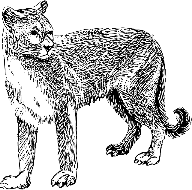 Cougar Panther Cat · Free vector graphic on Pixabay